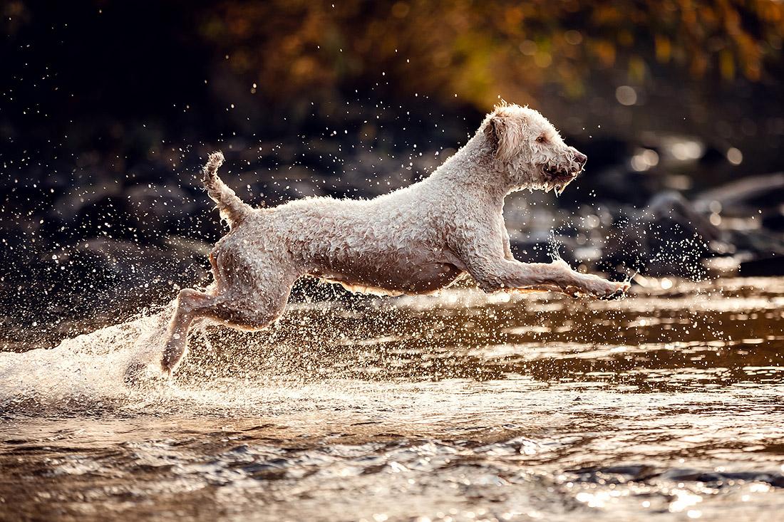 hunde fotoshooting wasser