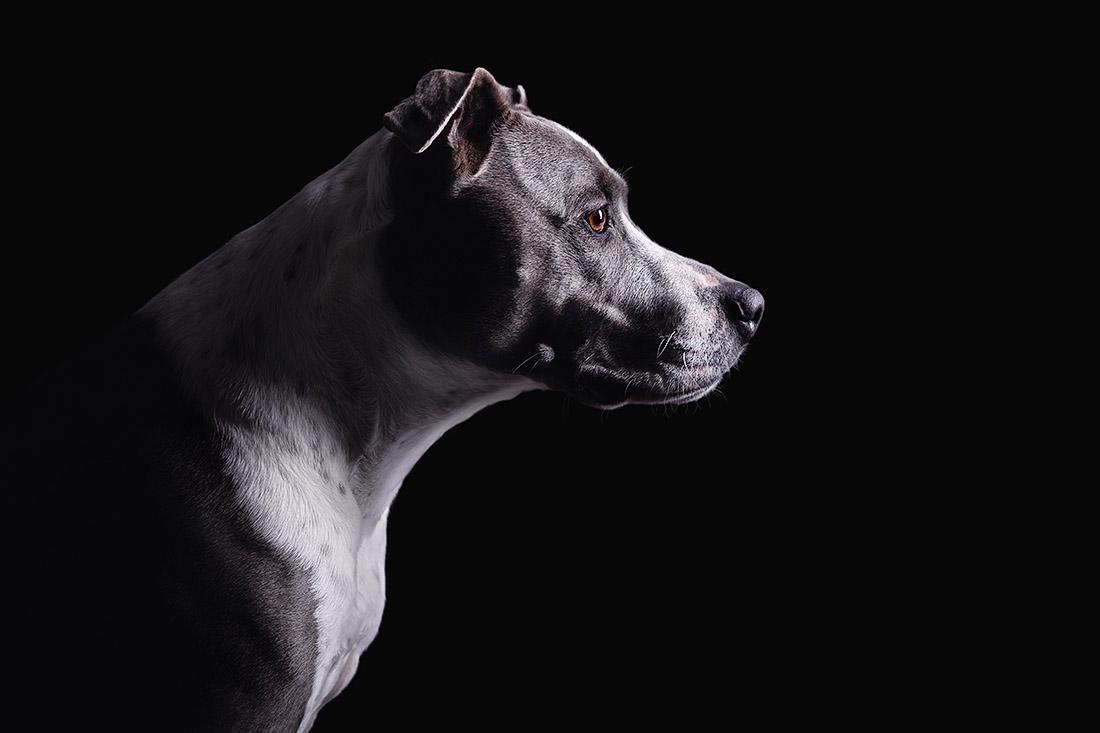 hunde fotoshooting studio