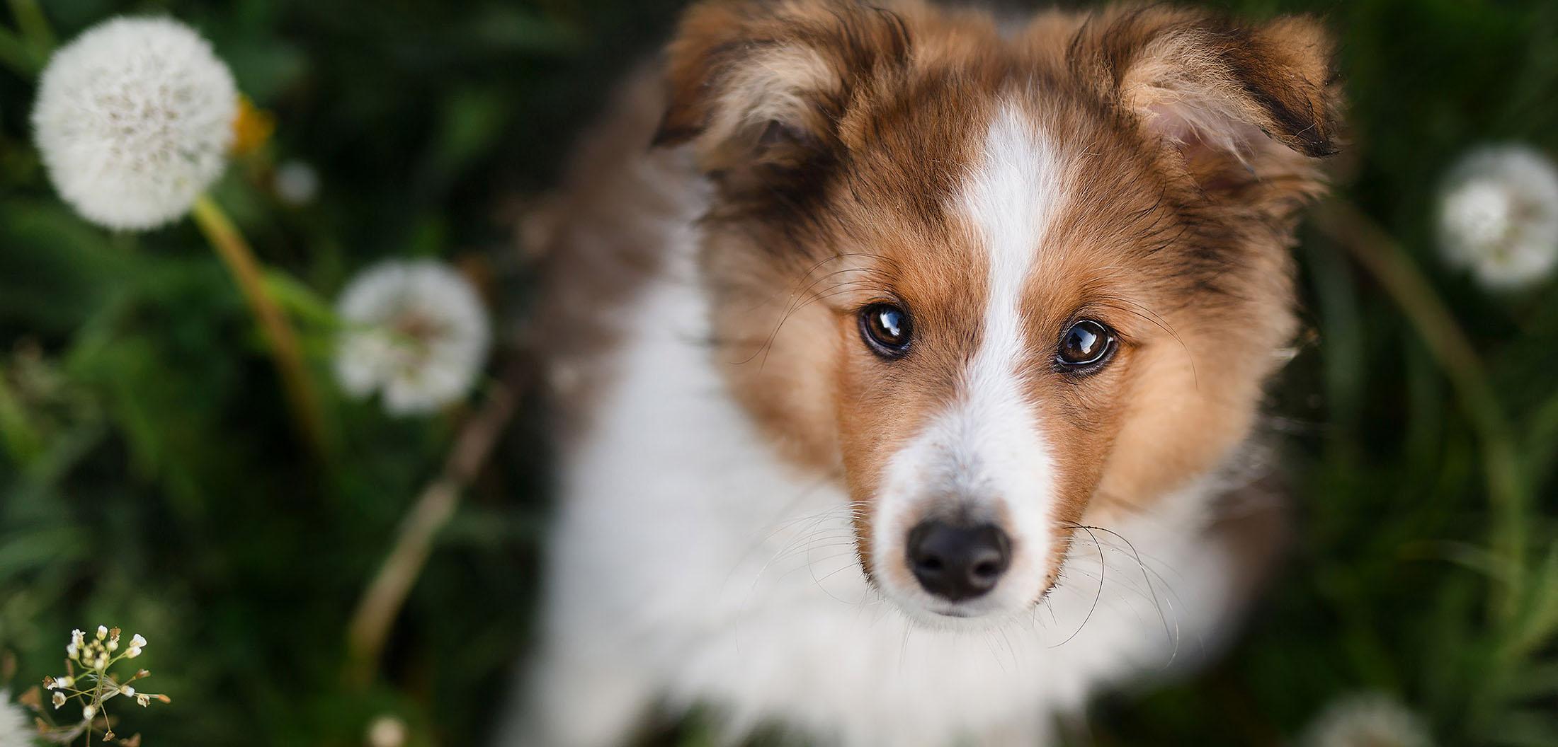 hunde fotoshooting welpe