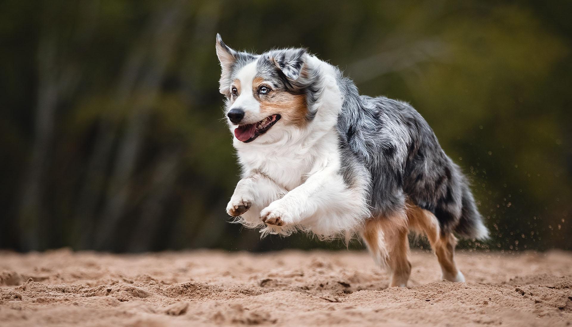 actionbilder hund